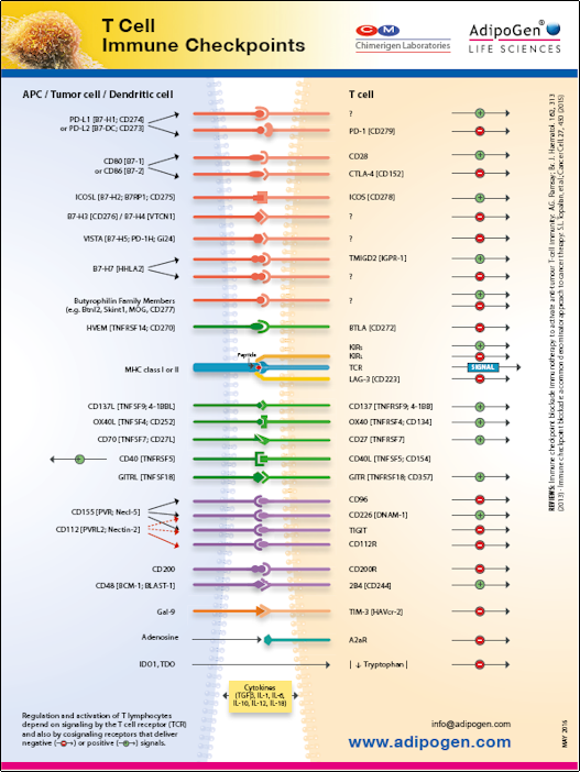 AdipoGen Wallchart TCell Immune Checkpoints 2016
