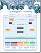 Cayman Cyclooxygenase Pathway