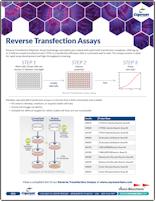 Cayman Reverse Transfection Assays