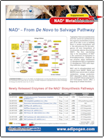 Flyer NAD Supplement - Adipogen