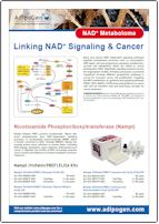 NAD+ Metabolome_Adipogen