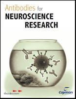 Neuroscience Antibodies